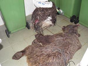 Obrázok pre výrobcu ,,pacienti,, pripravení na Patologicko-anatomickú pitvu,treba zistiť príčinu úhunu.